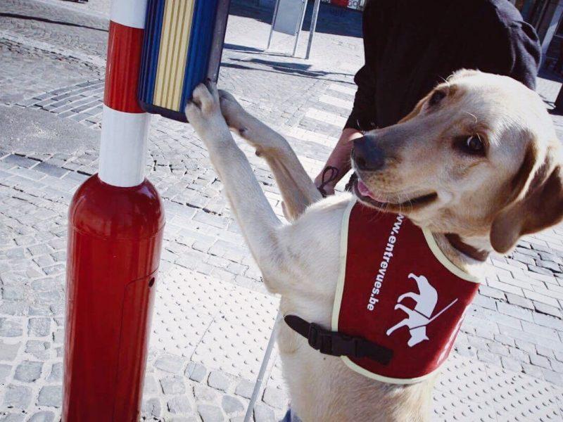 entrevues chien guide