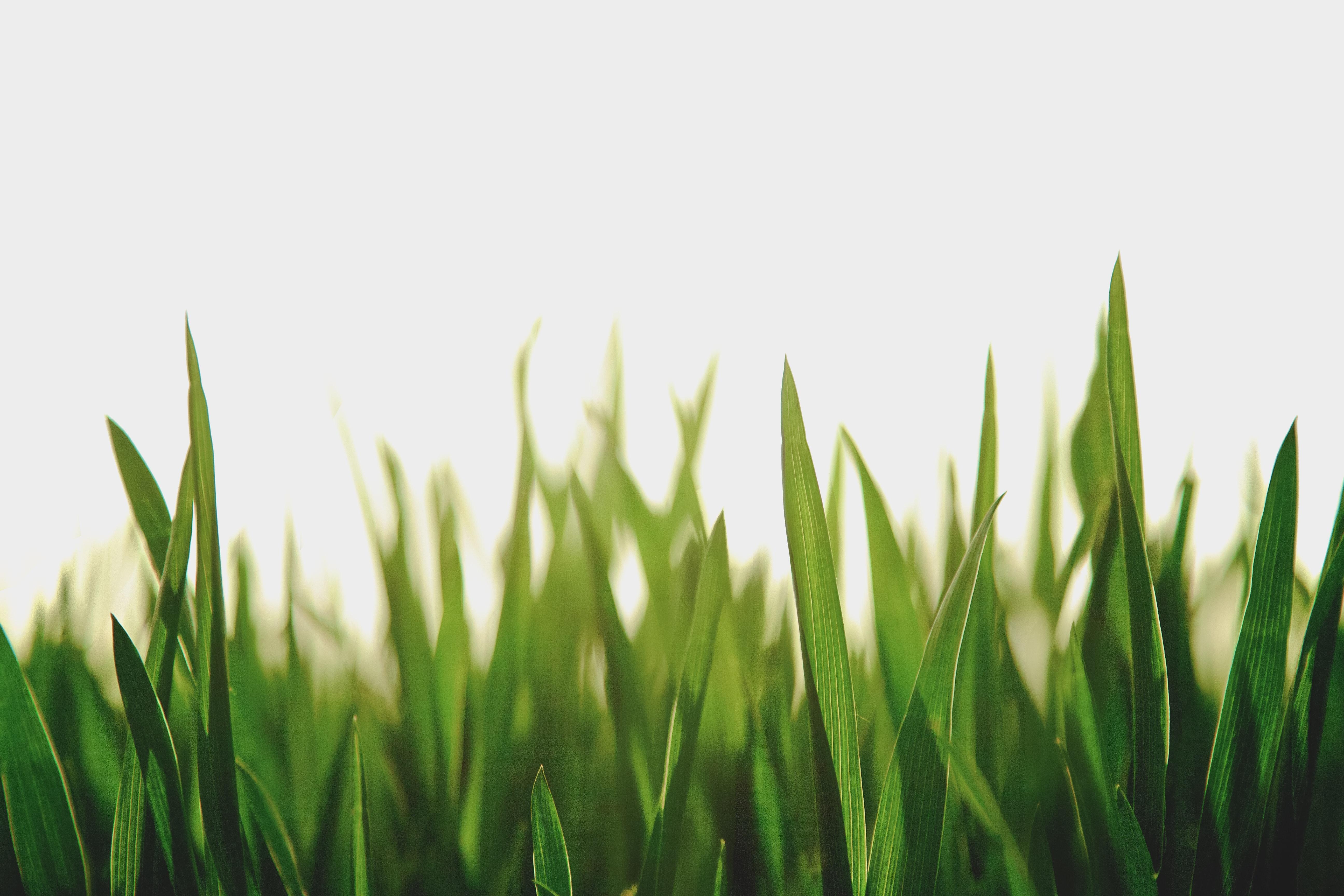 Les espaces verts de Seraing sont étudiés - Unsplash