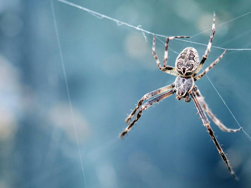Les yeux d'Ariane - araignée - Unsplash