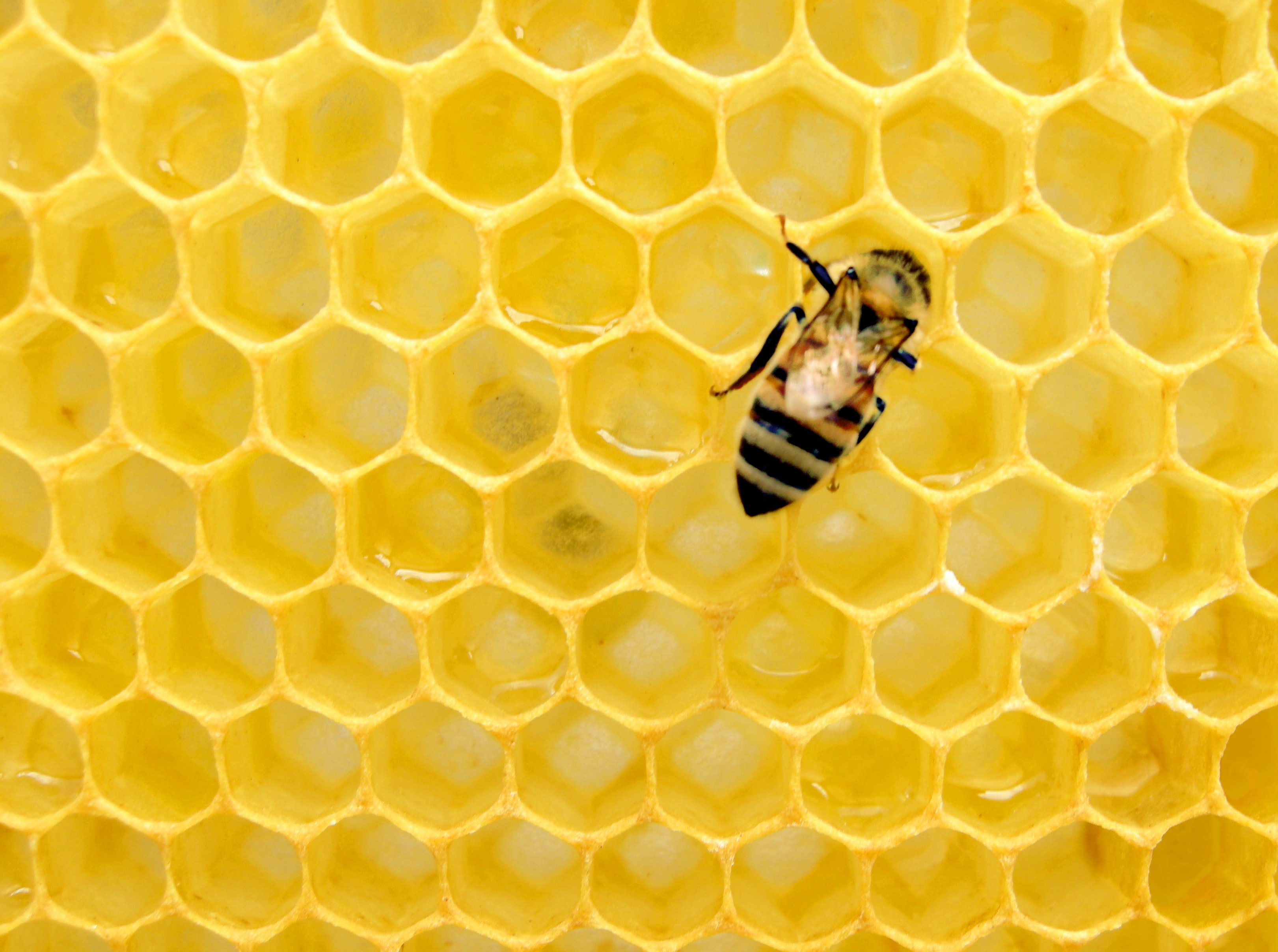 Les reines de liège promeut l'apiculture - Unsplash