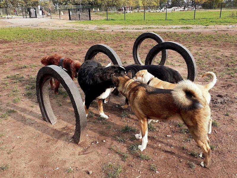 parc pour chiens
