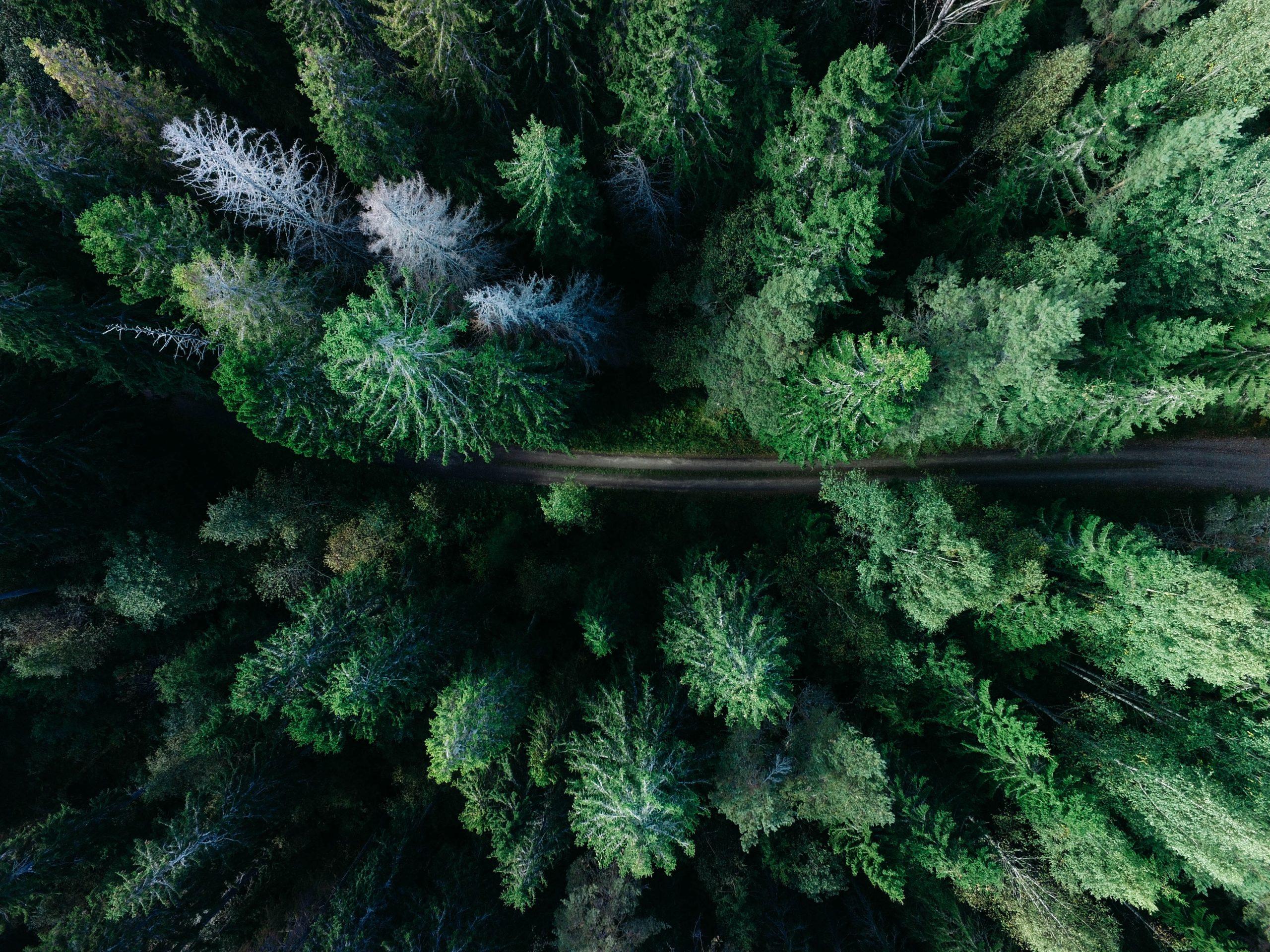 12 parcs naturels de wallonie - Unsplash - Geran de Klerk