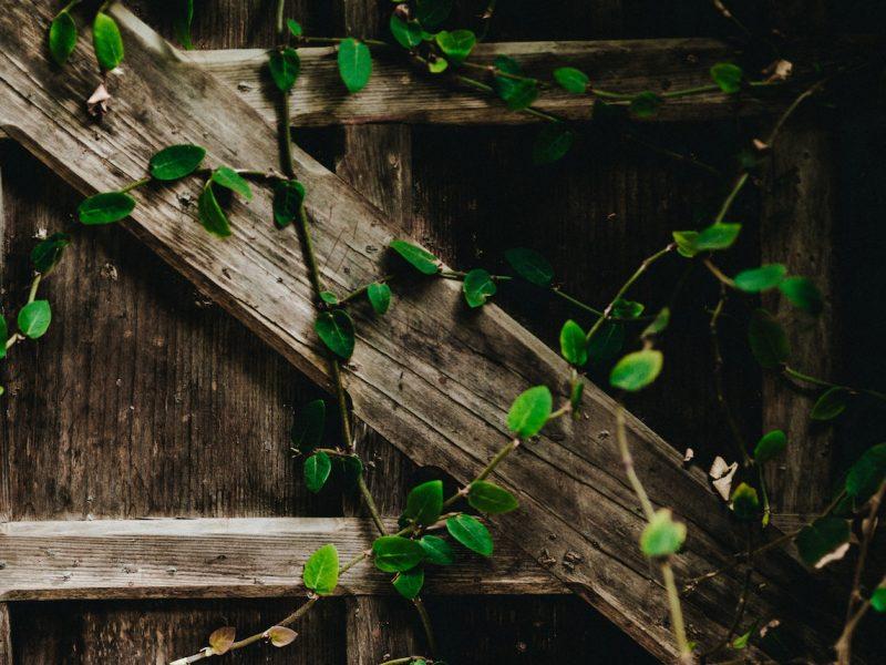 Jardin collectif en Outremeuse - Unsplash - Nathan Dumlao