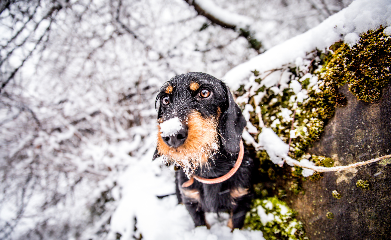Balades hivernales en Wallonie - Bpulettes Magazine DR