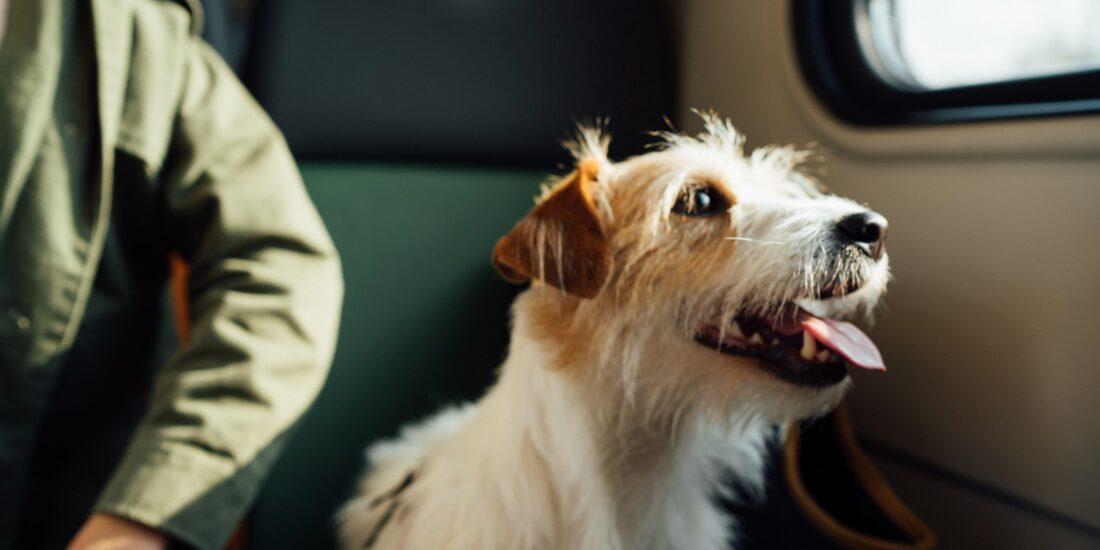 city-trip chien admis DR Unsplash Egor Gordeev